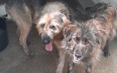 Max and Dora